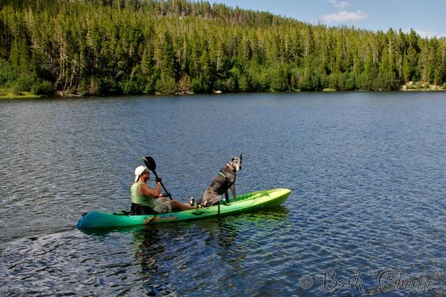 Great Dane kayaking in Wyoming