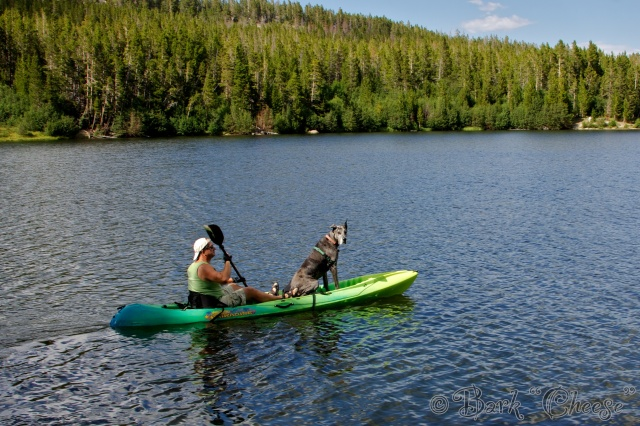 Great Dane kayaking in Wyoming
