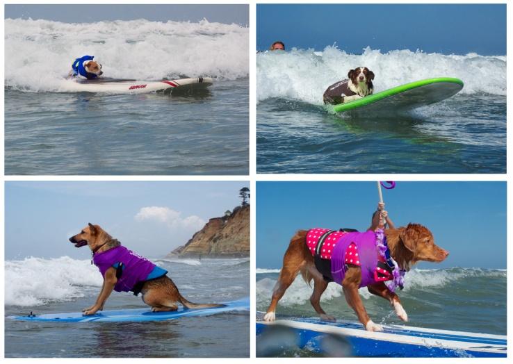 surf dog style
