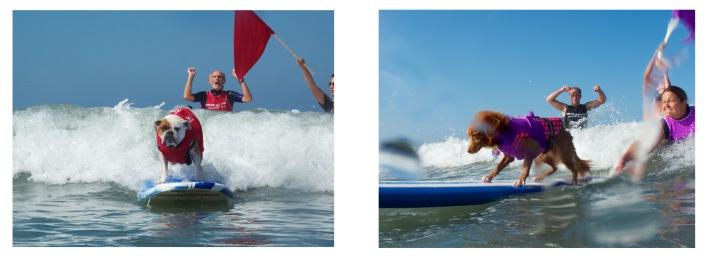surf dog support