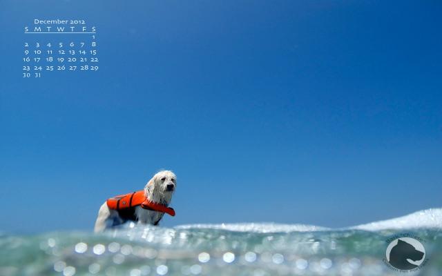 surfing dog, Loew's surfdog