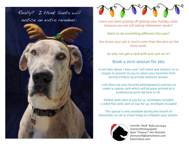 pet portrait for holiday card, great dane reindeer