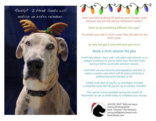 pet portrait for holiday card, great dane reindeer
