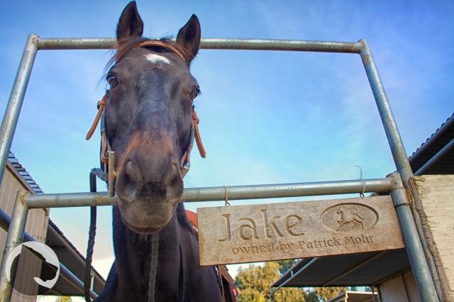 "horse, pet portrait, Bark ""Cheese!"", equine"