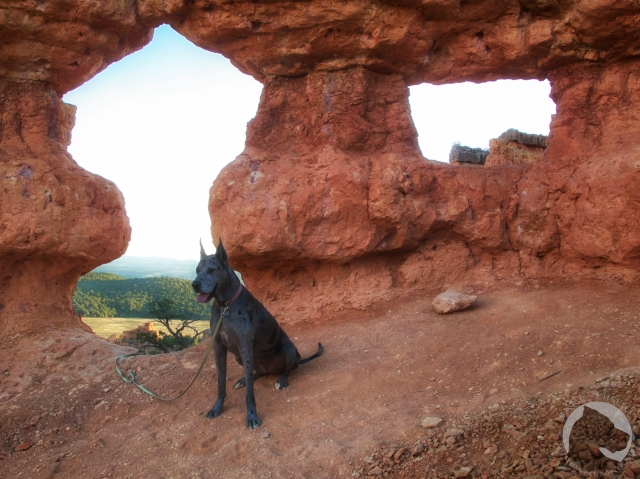 Red Canyon Utah, Great Dane, hiking