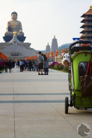 Taiwan dogs, pet portrait, pet stroller, Buddha, Schnauzer