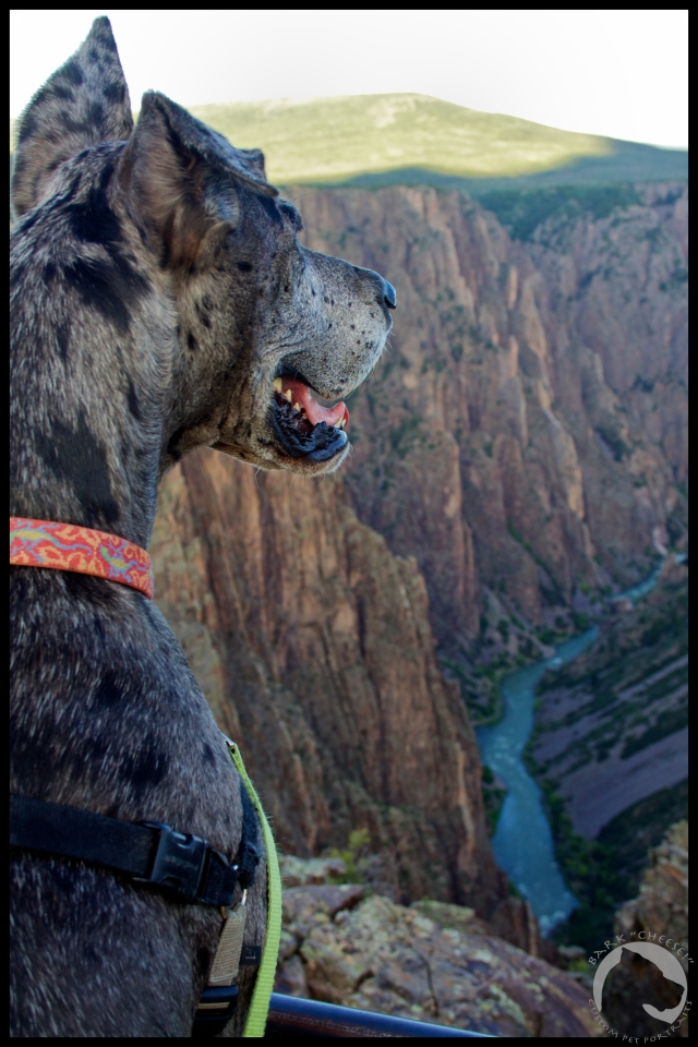 "Black Canyon of the Gunnison National Park, travel, pet photography, great dane, Varel, Bark ""Cheese!"""