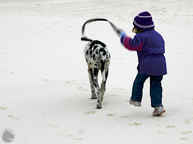 Whitesands National Monument, pet friendly, walking dog, child and dog, harlequin, Great Dane
