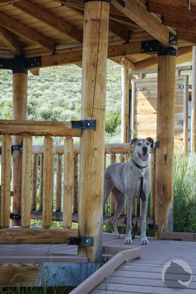 "Fossil Butte National Monument, National Park dogs, pet travel, Great Dane, Have Danes will Travel, Bark ""Cheese"", Pet portrait"