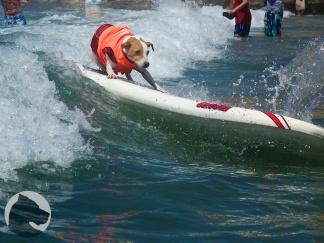 Helen Woodward Surf-a-thon