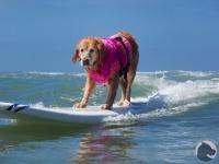 Helen Woodward Surf-a-thon,beach